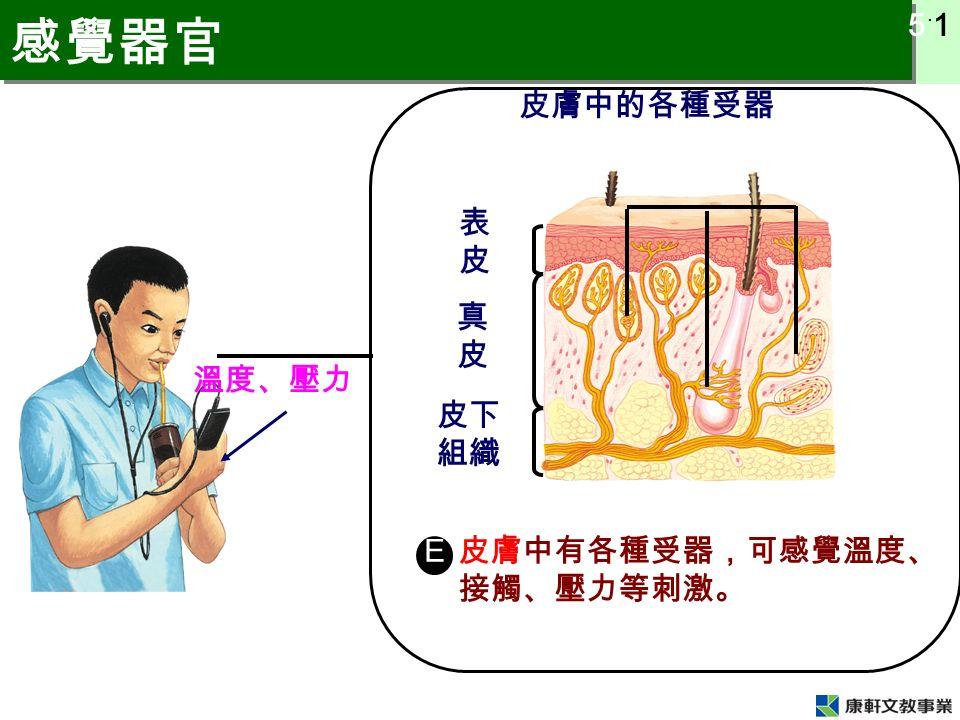 5 ˙ 1 感覺器官 皮膚中有各種受器,可感覺溫度、 接觸、壓力等刺激。 皮膚中的各種受器 E 溫度、壓力 表皮表皮 真皮真皮 皮下 組織