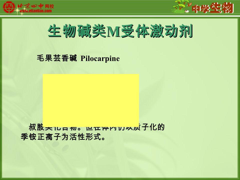 生物碱类 M 受体激动剂 毛果芸香碱 Pilocarpine 叔胺类化合物。但在体内仍以质子化的 季铵正离子为活性形式。