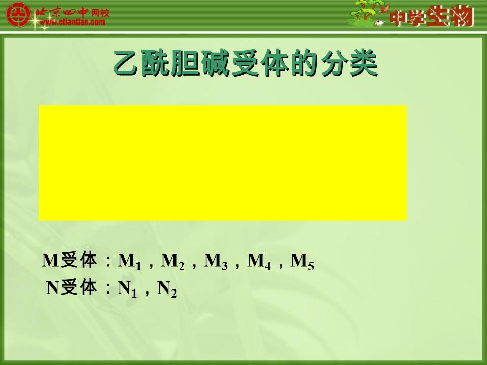 乙酰胆碱受体的分类 M 受体: M 1 , M 2 , M 3 , M 4 , M 5 N 受体: N 1 , N 2