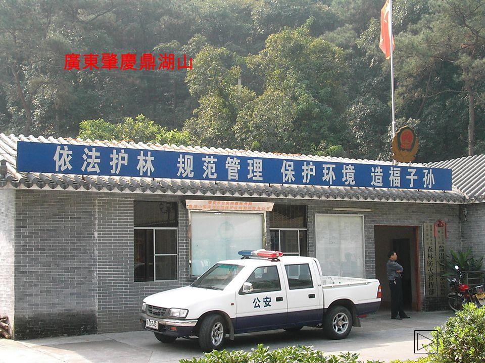 廣東肇慶鼎湖山