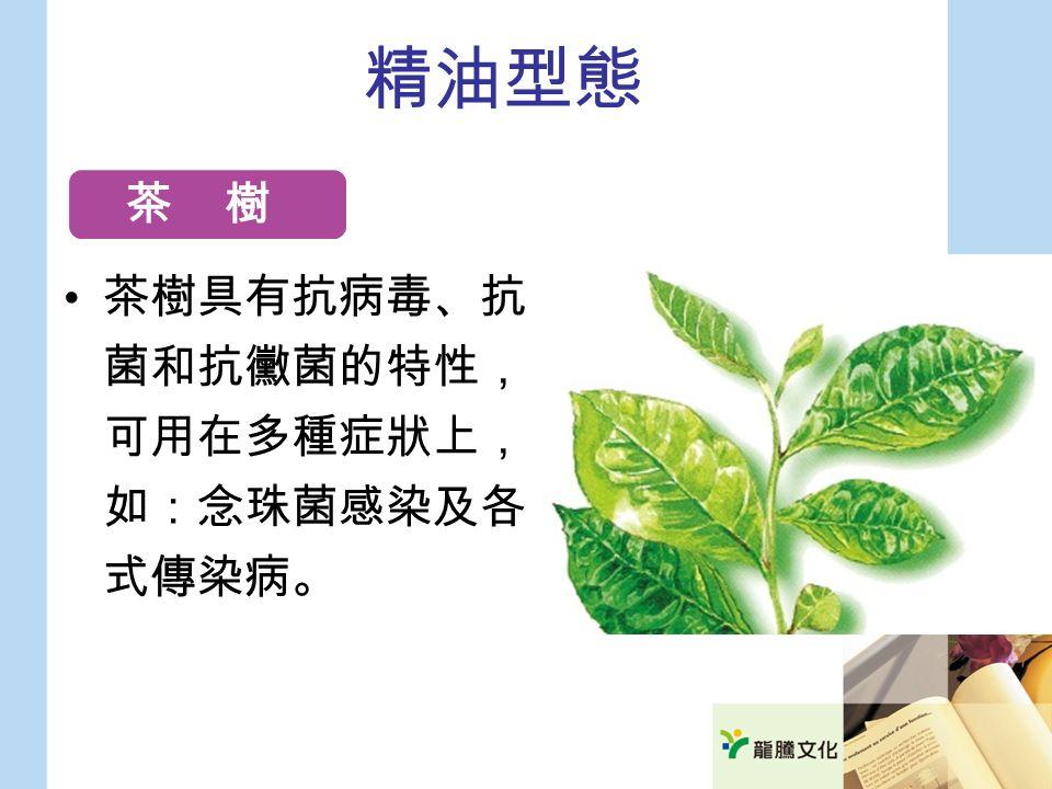 精油型態 茶樹具有抗病毒、抗 菌和抗黴菌的特性, 可用在多種症狀上, 如:念珠菌感染及各 式傳染病。 茶 樹