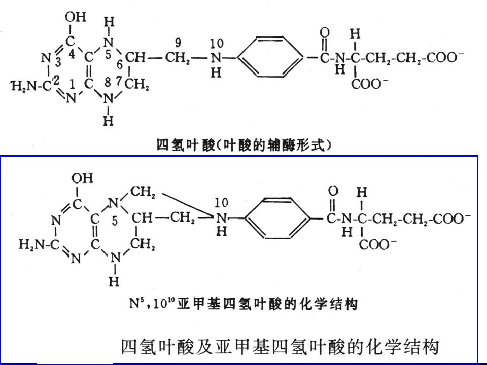3 、 physiological function A 、 the carrier of activated one carbon units 一碳单位 --- 含有一个碳原子的 有机基团 如: -CH 3 -CH 2 - -CH= , -CHO -CHNH-