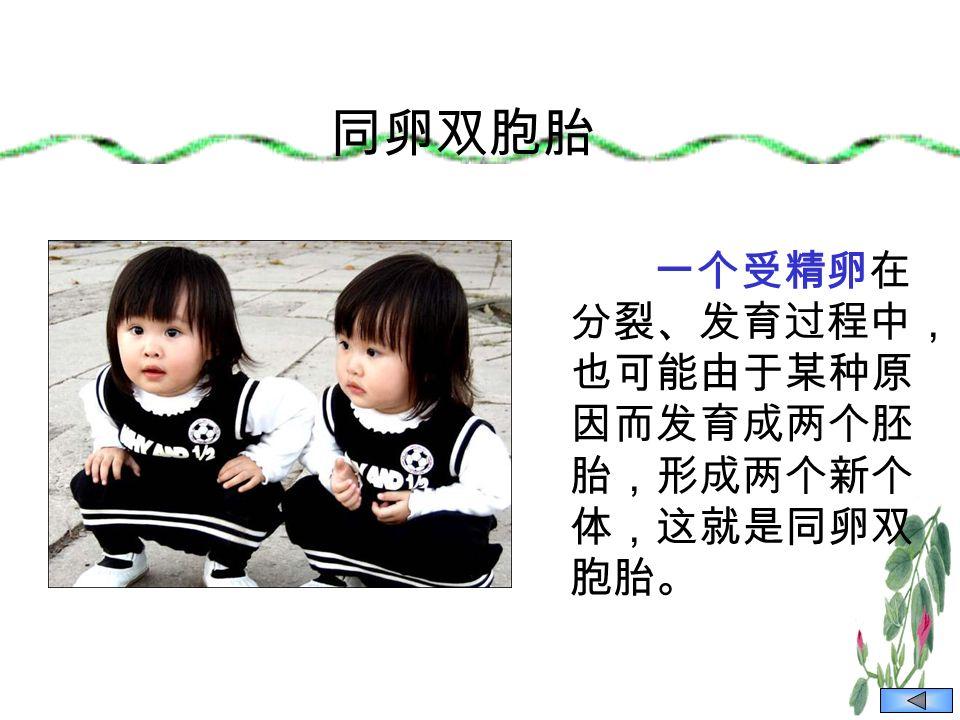 同卵双胞胎 一个受精卵在 分裂、发育过程中, 也可能由于某种原 因而发育成两个胚 胎,形成两个新个 体,这就是同卵双 胞胎。