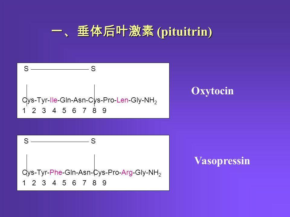 S ———————— S Cys-Tyr-Ile-Gln-Asn-Cys-Pro-Len-Gly-NH 2 1 2 3 4 5 6 7 8 9 S ———————— S Cys-Tyr-Phe-Gln-Asn-Cys-Pro-Arg-Gly-NH 2 1 2 3 4 5 6 7 8 9 Oxytocin Vasopressin 一、垂体后叶激素 (pituitrin)
