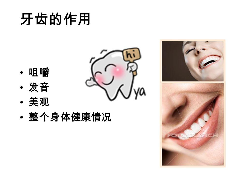 牙齿的作用 咀嚼 发音 美观 整个身体健康情况