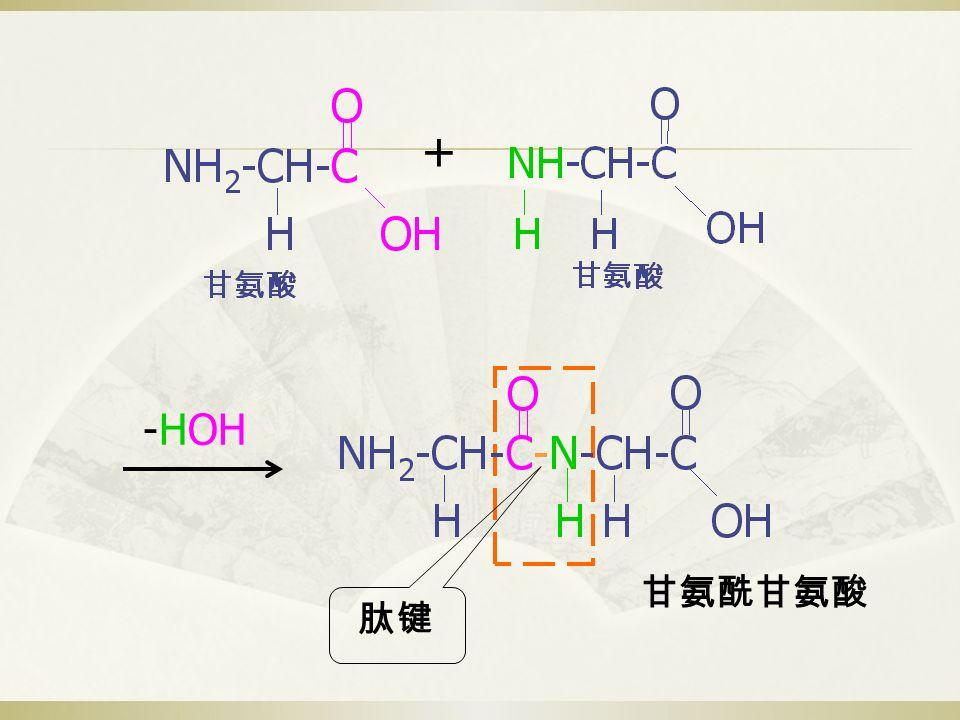 + -HOH 甘氨酰甘氨酸 肽键