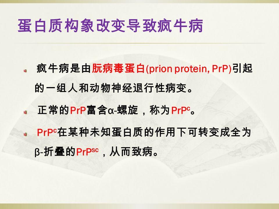 蛋白质构象改变导致疯牛病 疯牛病是由朊病毒蛋白 (prion protein, PrP) 引起 的一组人和动物神经退行性病变。 正常的 PrP 富含 α- 螺旋,称为 PrP c 。 PrP c 在某种未知蛋白质的作用下可转变成全为 β- 折叠的 PrP sc ,从而致病。