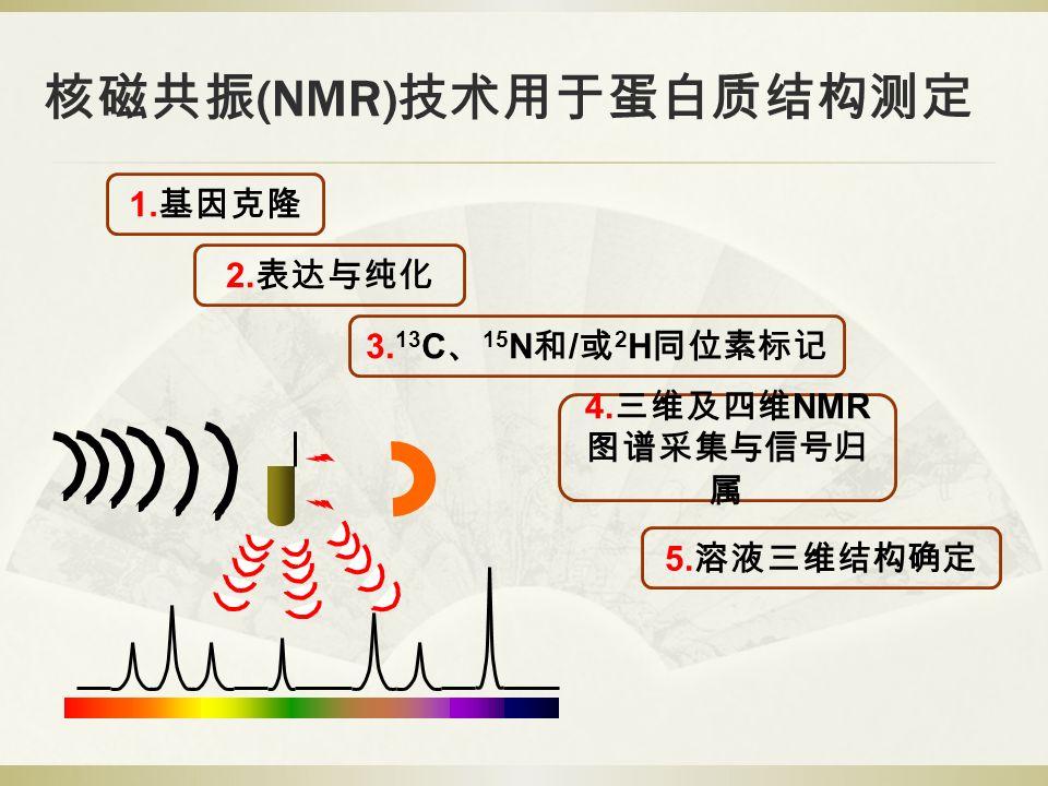 核磁共振 (NMR) 技术用于蛋白质结构测定 1. 基因克隆 2. 表达与纯化 3. 13 C 、 15 N 和 / 或 2 H 同位素标记 4.