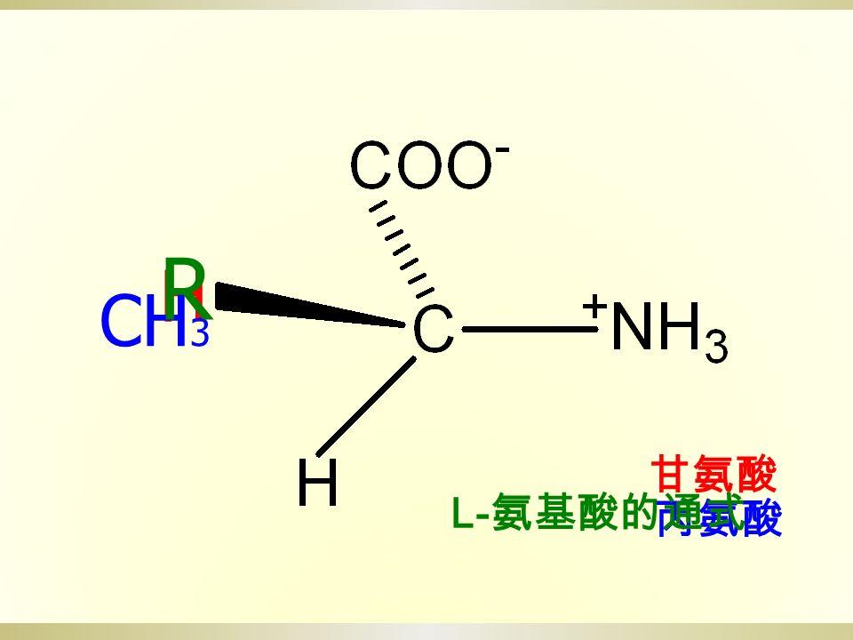 H 甘氨酸 CH 3 丙氨酸 L- 氨基酸的通式 R