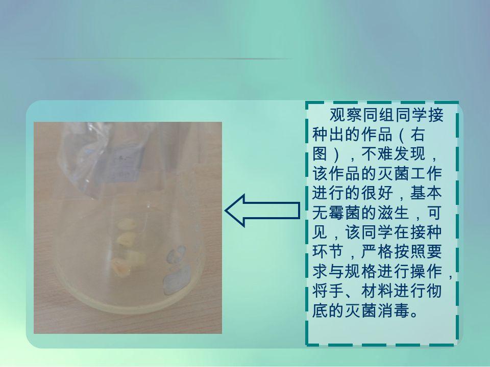观察同组同学接 种出的作品(右 图),不难发现, 该作品的灭菌工作 进行的很好,基本 无霉菌的滋生,可 见,该同学在接种 环节,严格按照要 求与规格进行操作, 将手、材料进行彻 底的灭菌消毒。