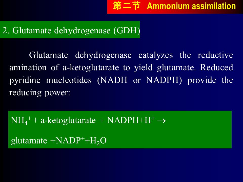Glutamate dehydrogenase catalyzes the reductive amination of a-ketoglutarate to yield glutamate.