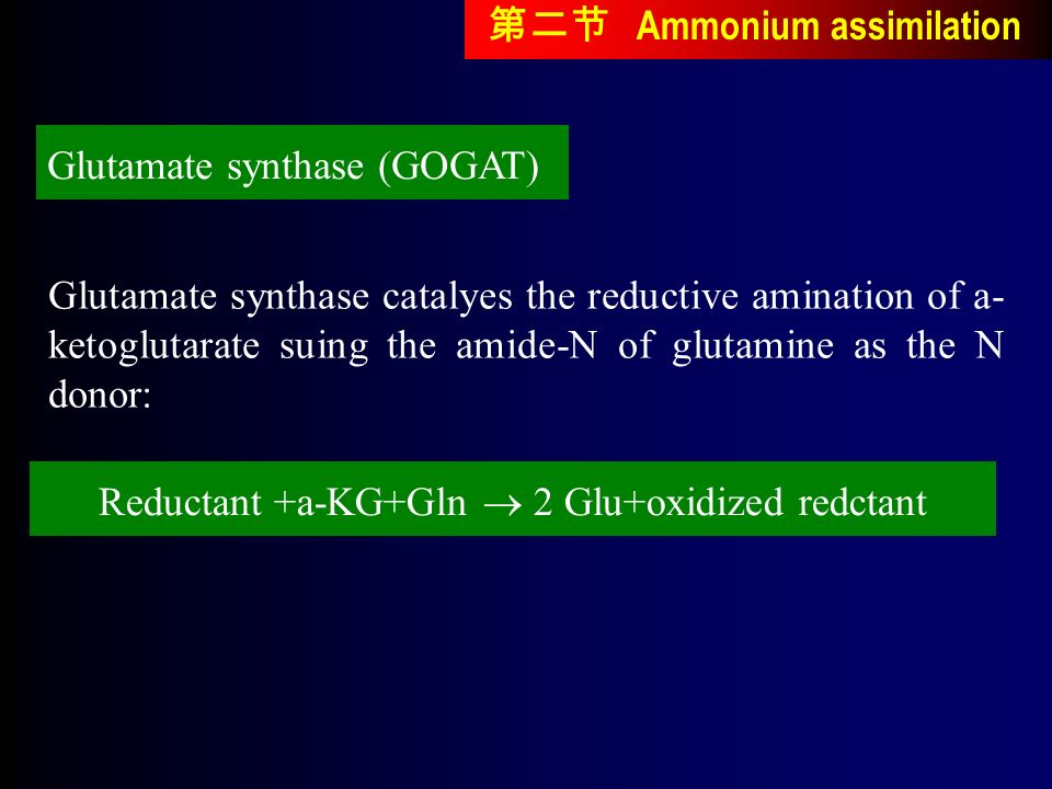 Glutamate synthase catalyes the reductive amination of a- ketoglutarate suing the amide-N of glutamine as the N donor: Glutamate synthase (GOGAT) Reductant +a-KG+Gln  2 Glu+oxidized redctant 第二节 Ammonium assimilation