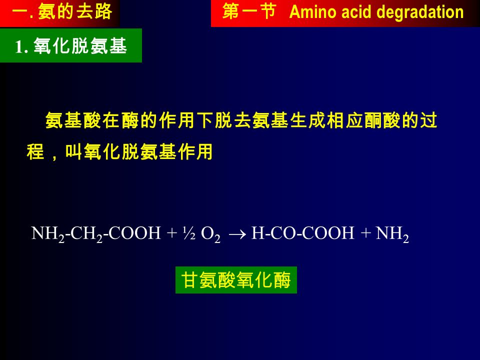 NH 2 -CH 2 -COOH + ½ O 2  H-CO-COOH + NH 2 第一节 Amino acid degradation 1.